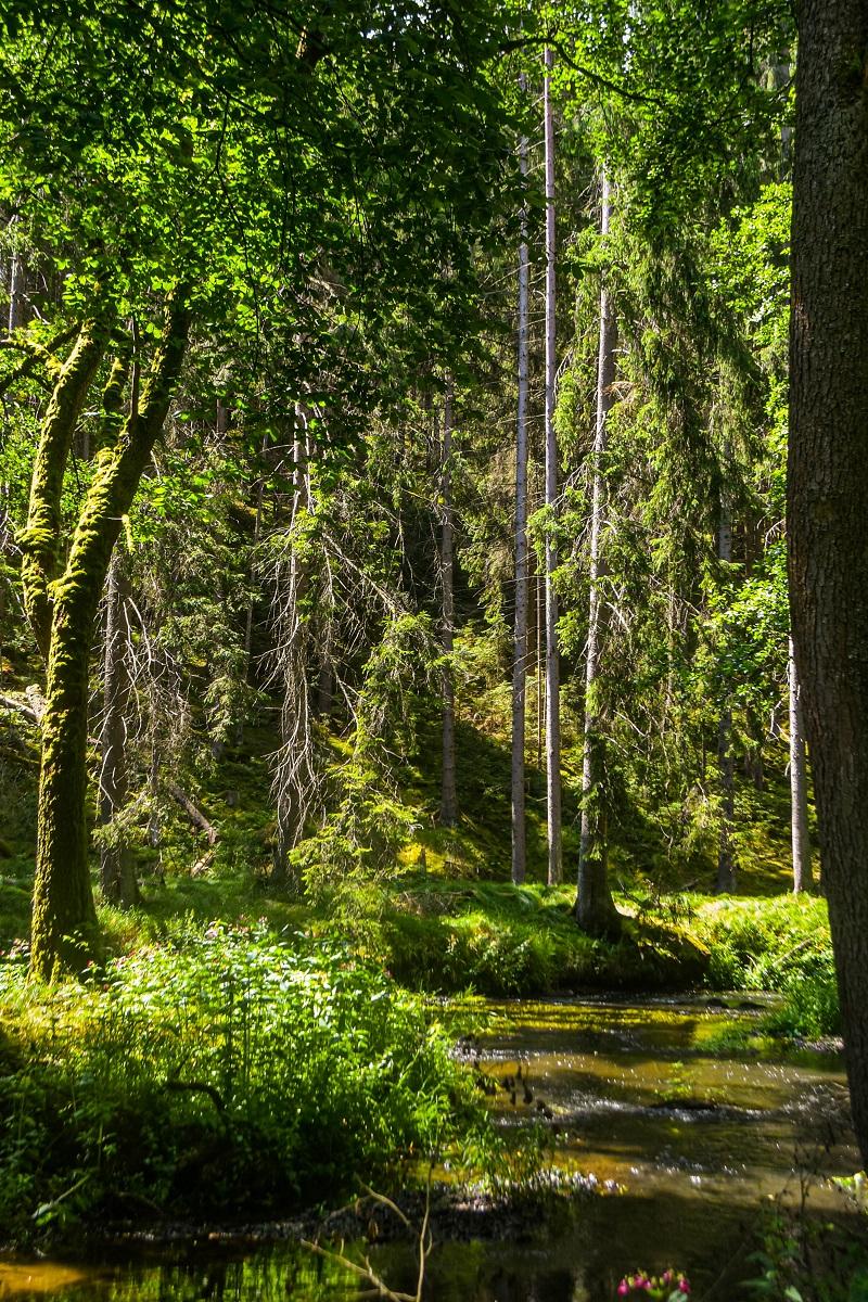 Waldnaabtal Wandern