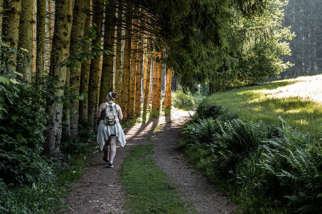 Wandern durch eine Allee zur Saußbachklamm