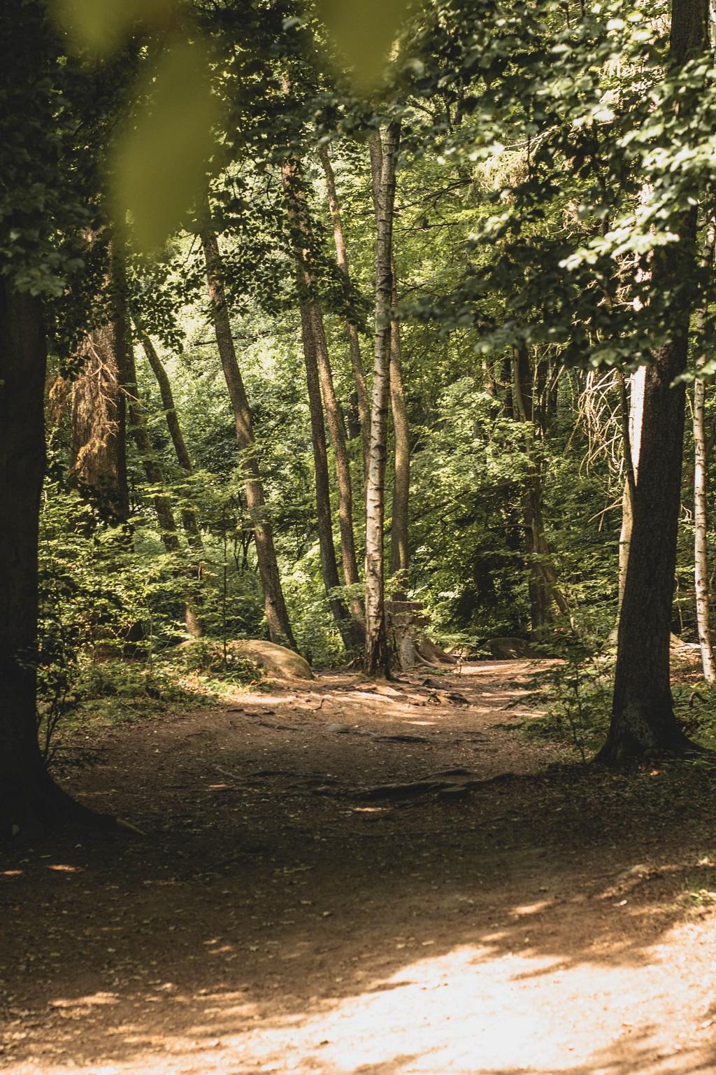 Wanderweg im Höllbachtal
