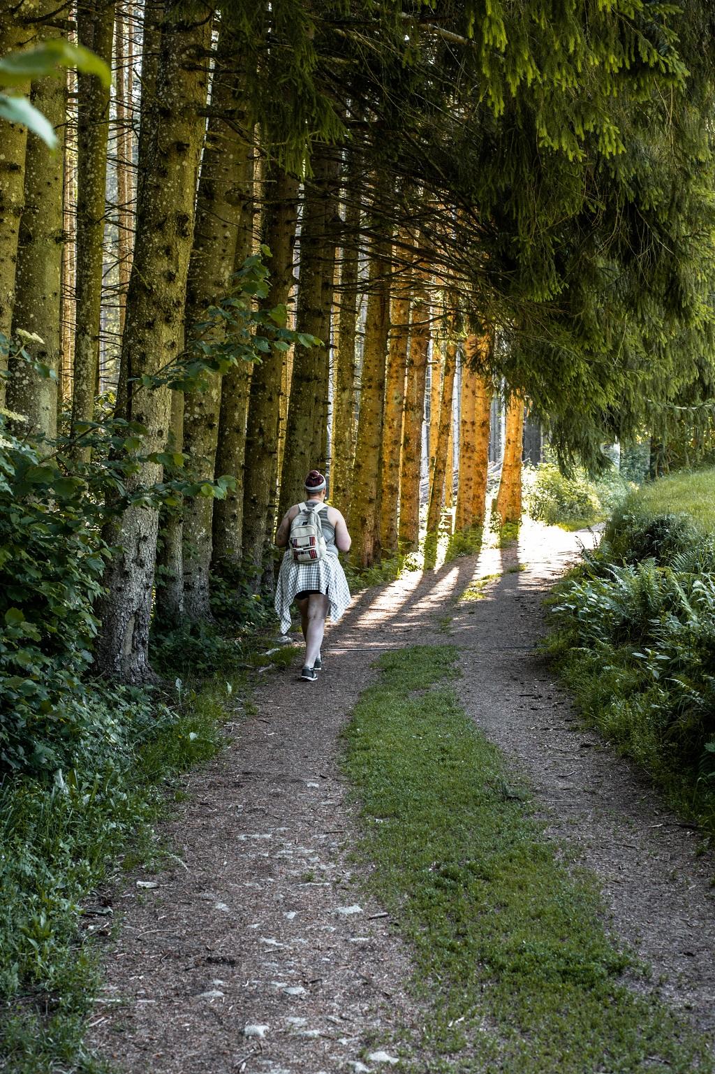 Wandern zu Saußbachklamm durch eine Allee