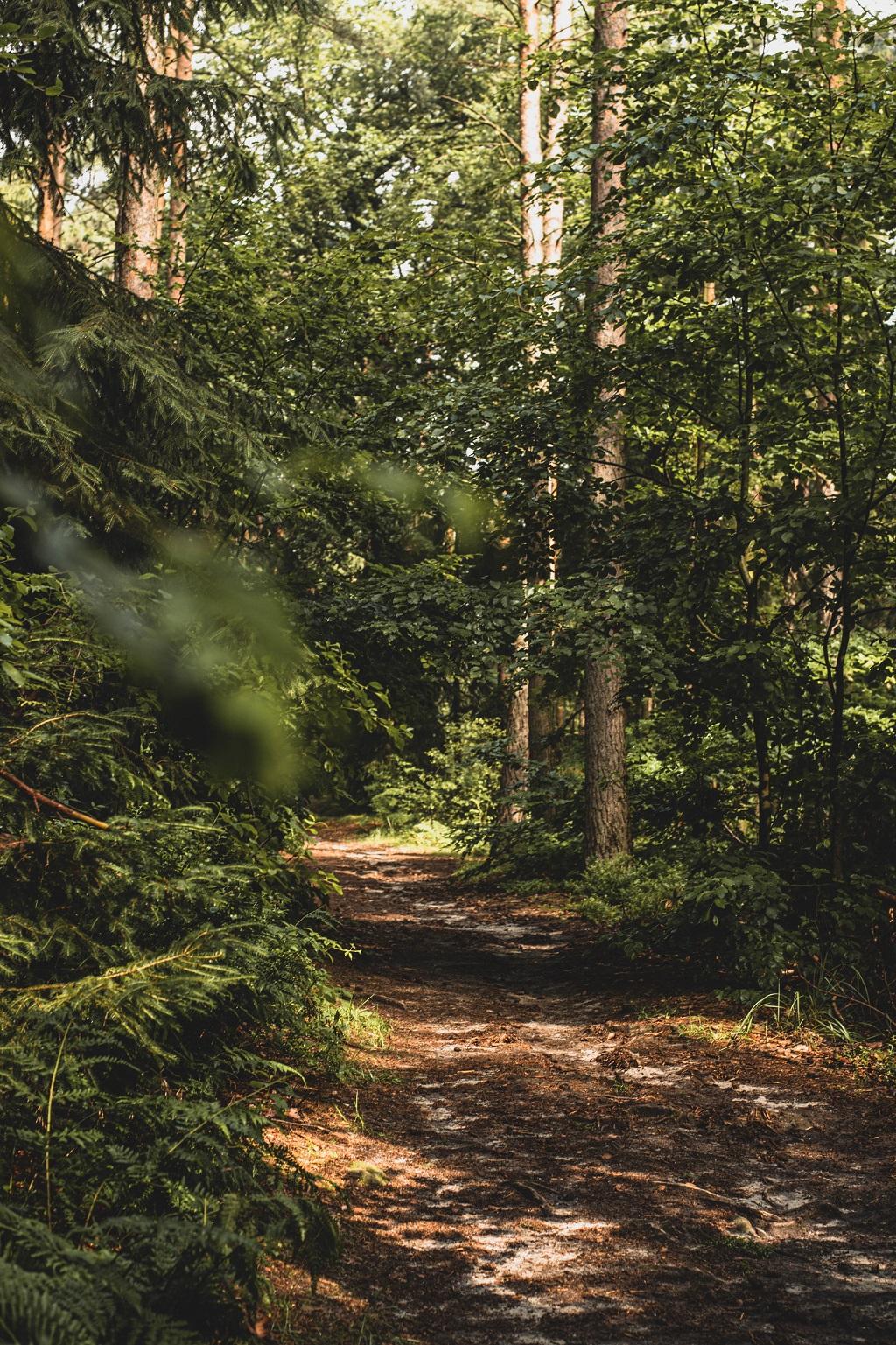 Wald im Spätsommer