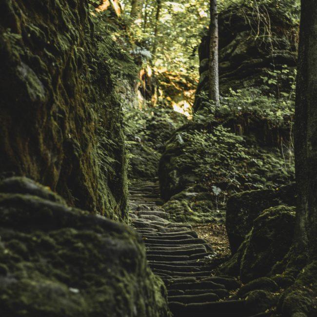Stufen hinauf im Uttewalder Grund