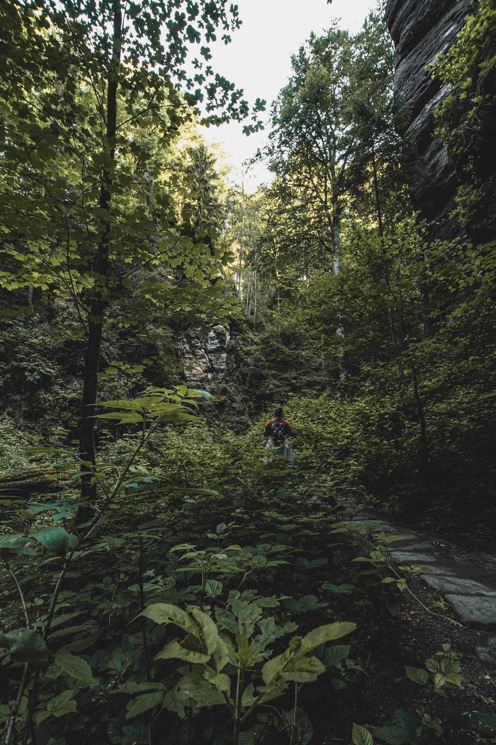 Aufnahme von mir im Wald
