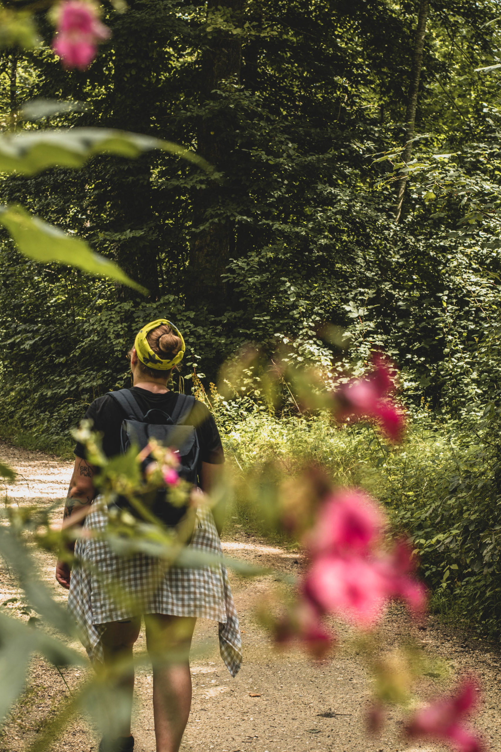 Wandern durch den Donauwald