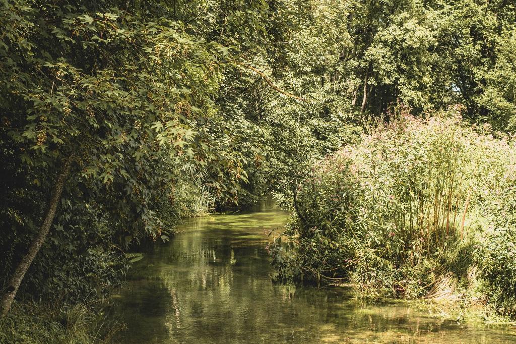 Fluss und Wälder