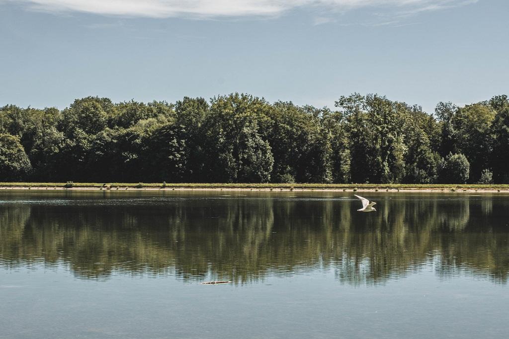 Vogel fliegt über Wasser