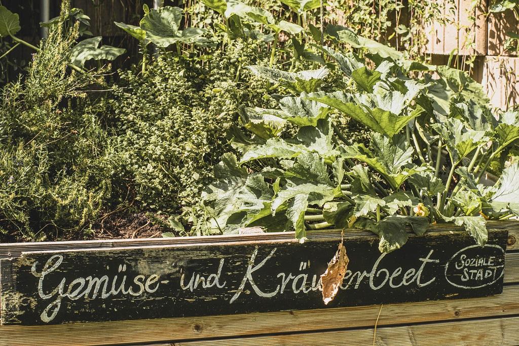 Gemüse und Kräuterbeet