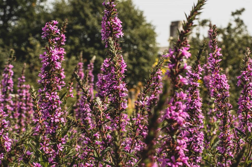 Blüten im Botanischen Garten
