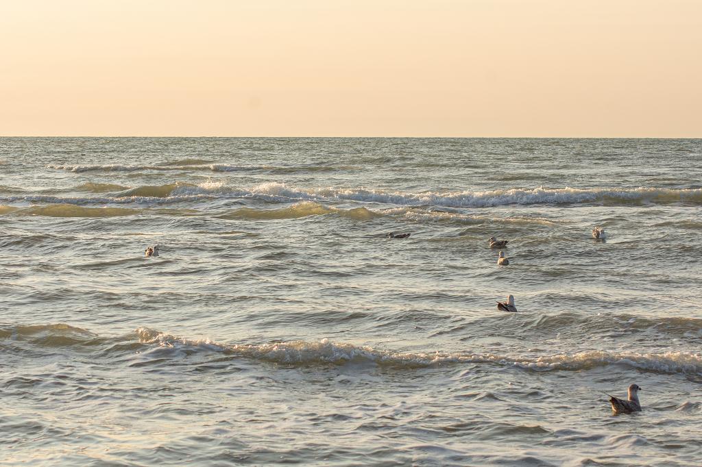 Meer mit Möwen im Sonnenuntergang