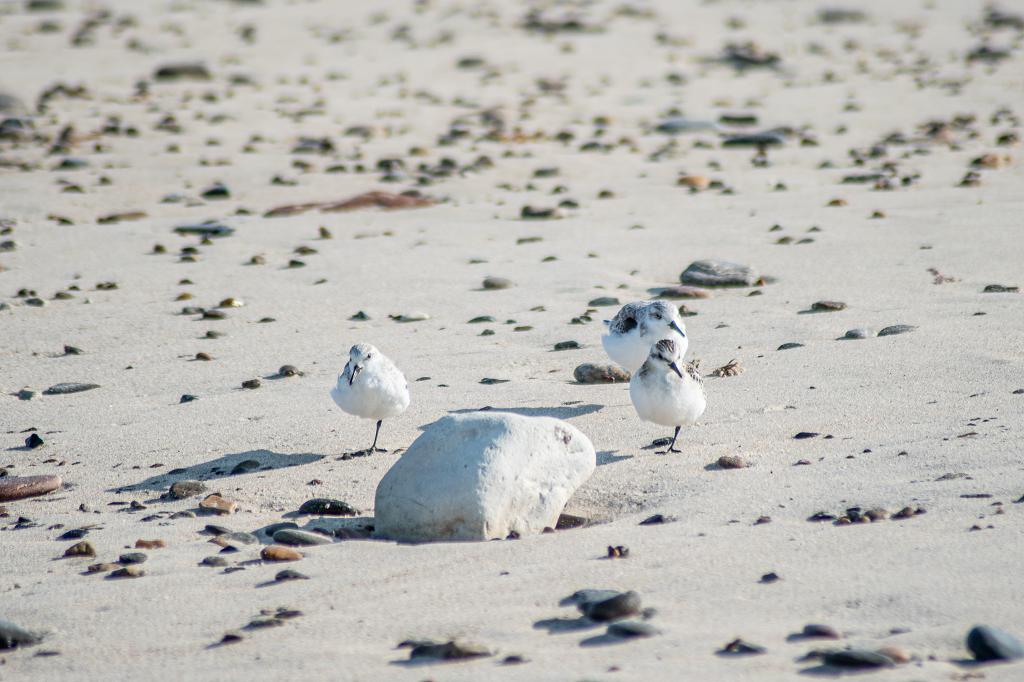 Kleine Möwen am Strand