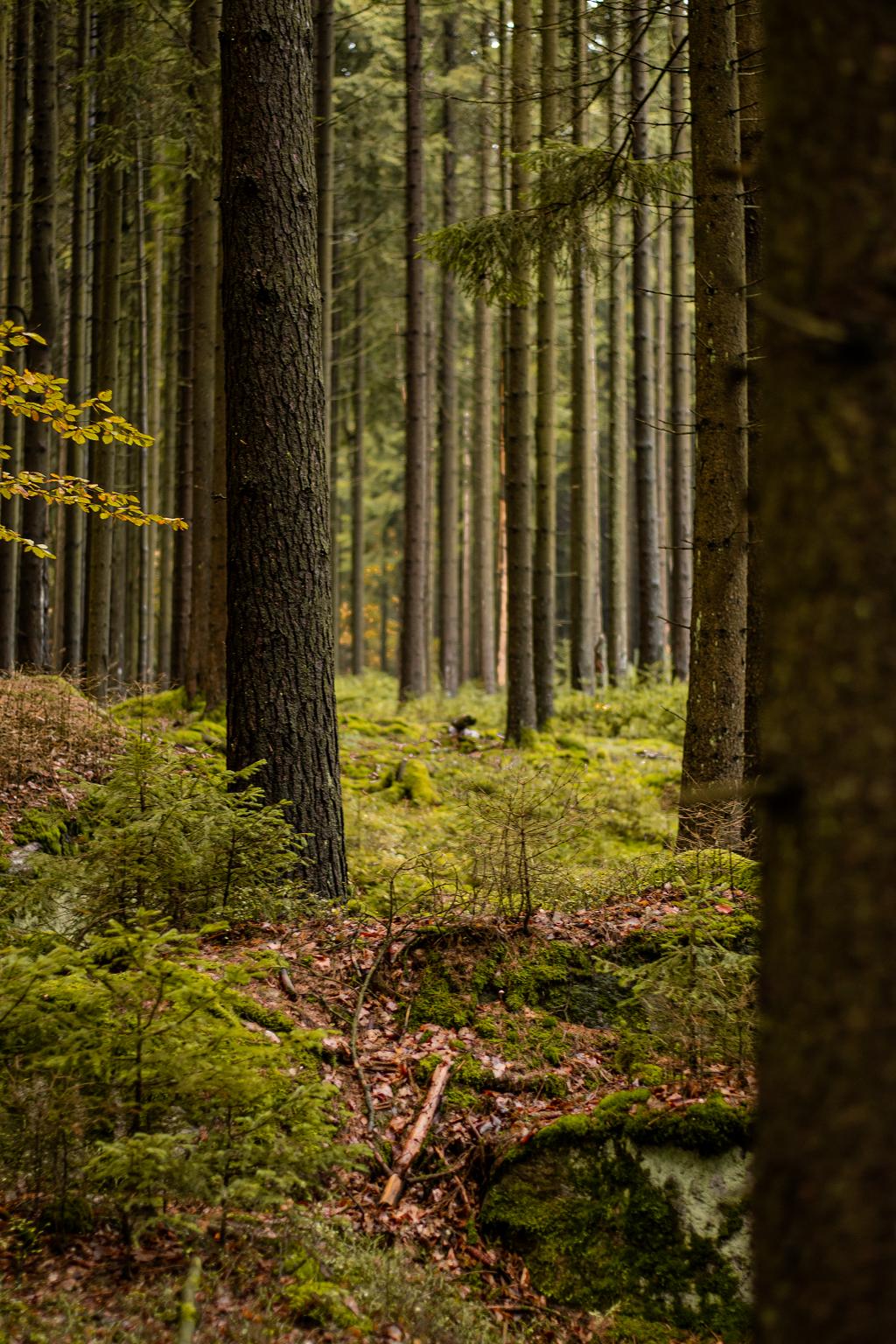 Grüner Wald im Herbst
