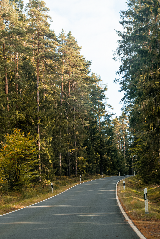 Herbstliche Straße im Steinwald