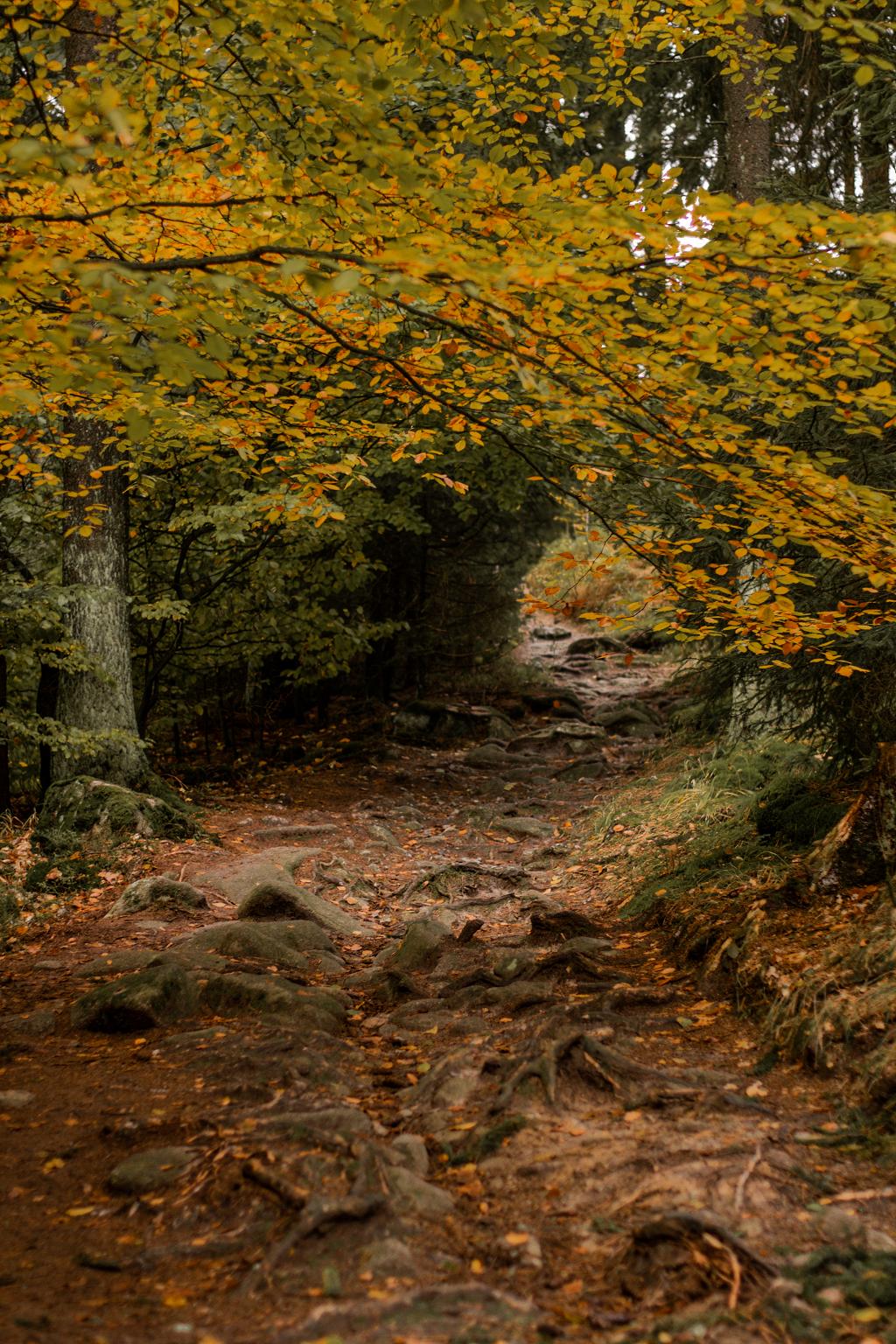 Weg durch den Wald im Herbst