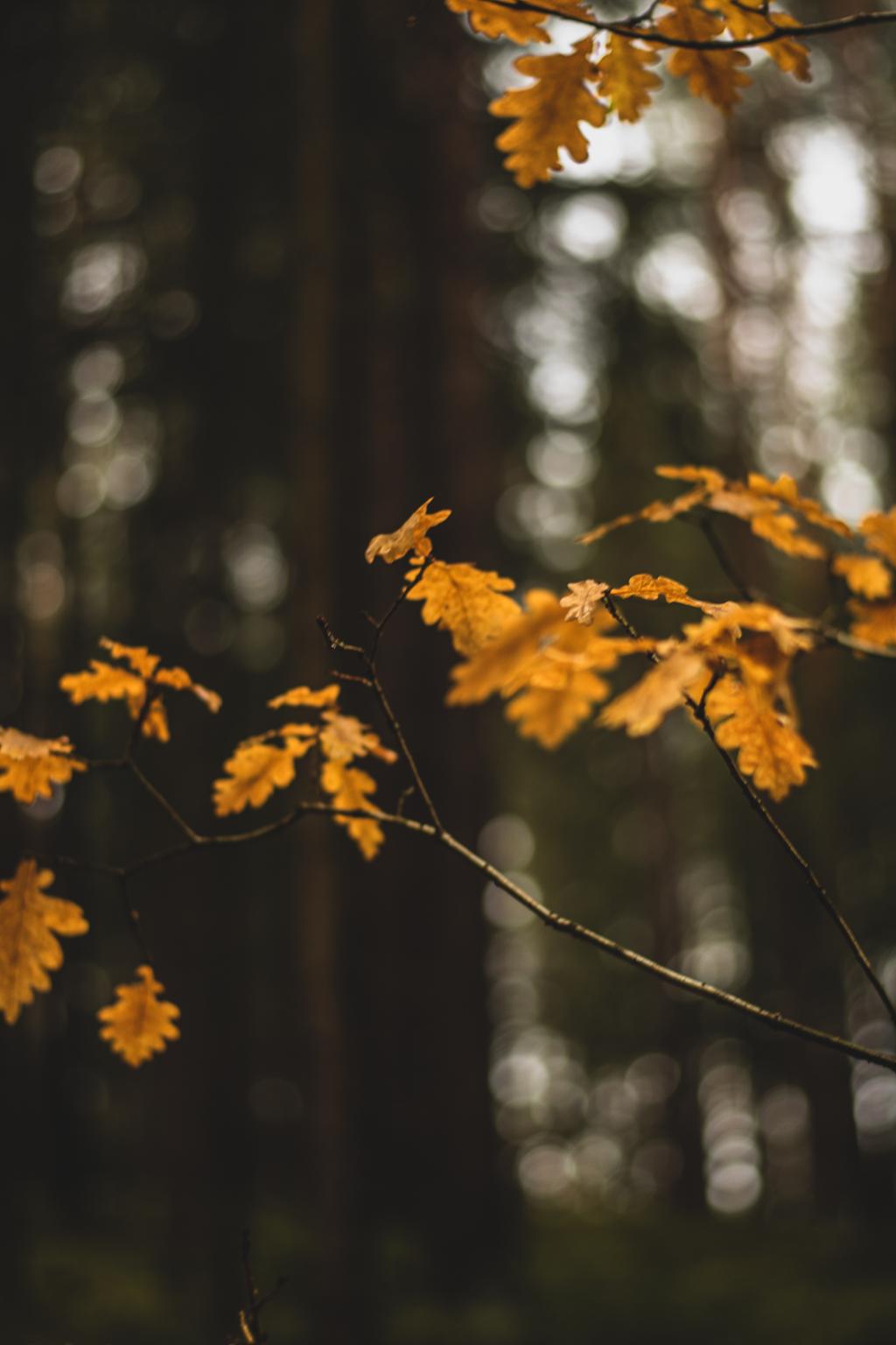 Gelbe Blätter im Wald