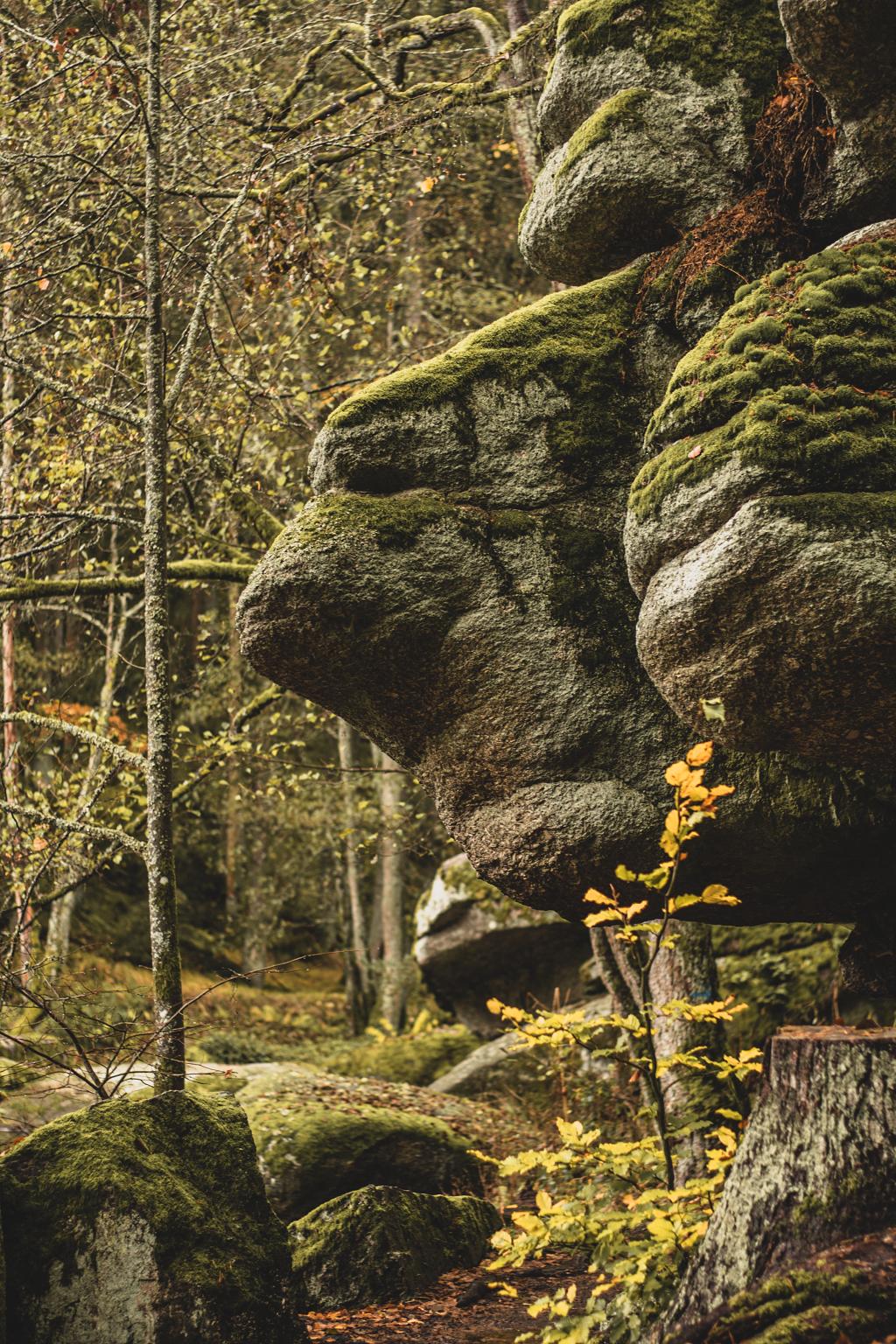 Felsformationen im Wald