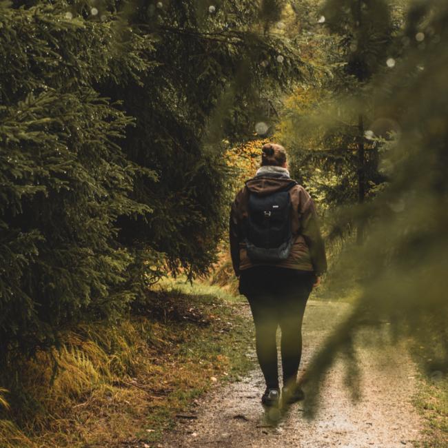 Wandern durch den regnerischen Steinwald