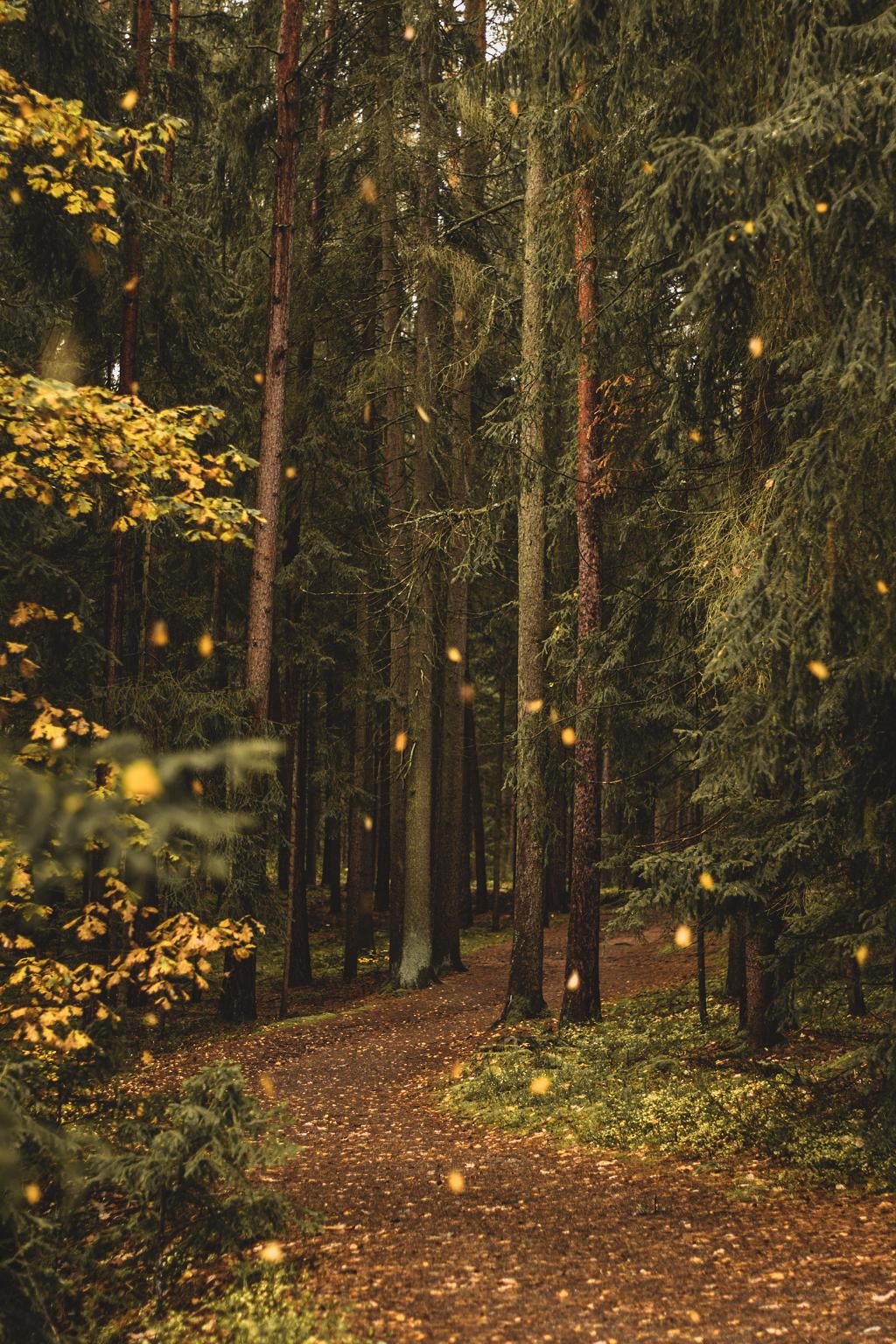 Wald im Herbst mit fallenden Blättern