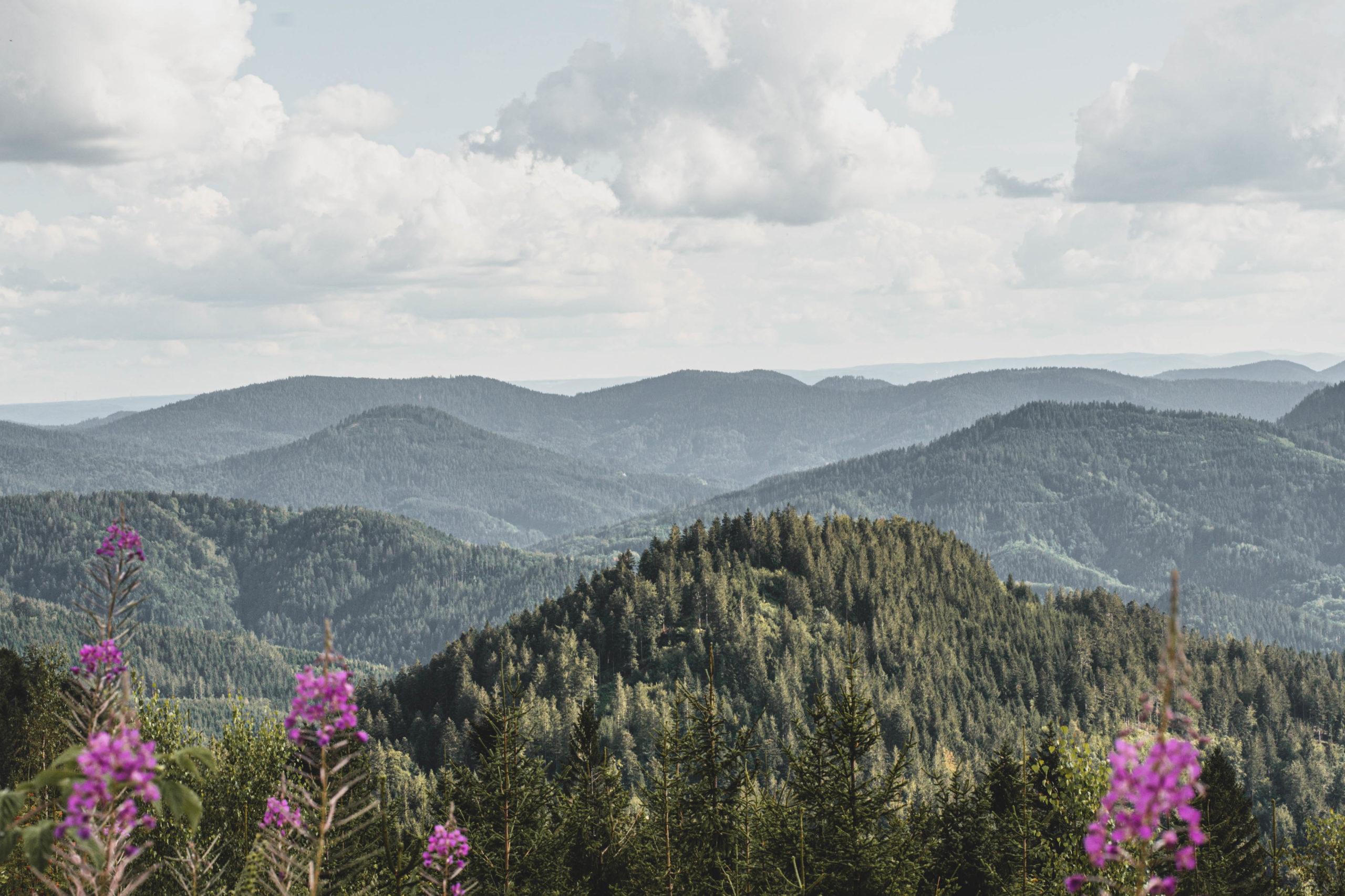 Blick auf den Schwarzwald und die grünen Hügel