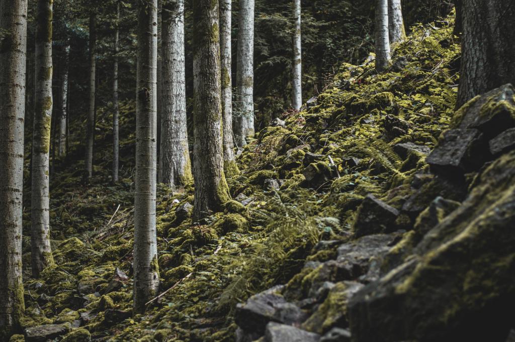 Wald beim Burgbachwasserfall