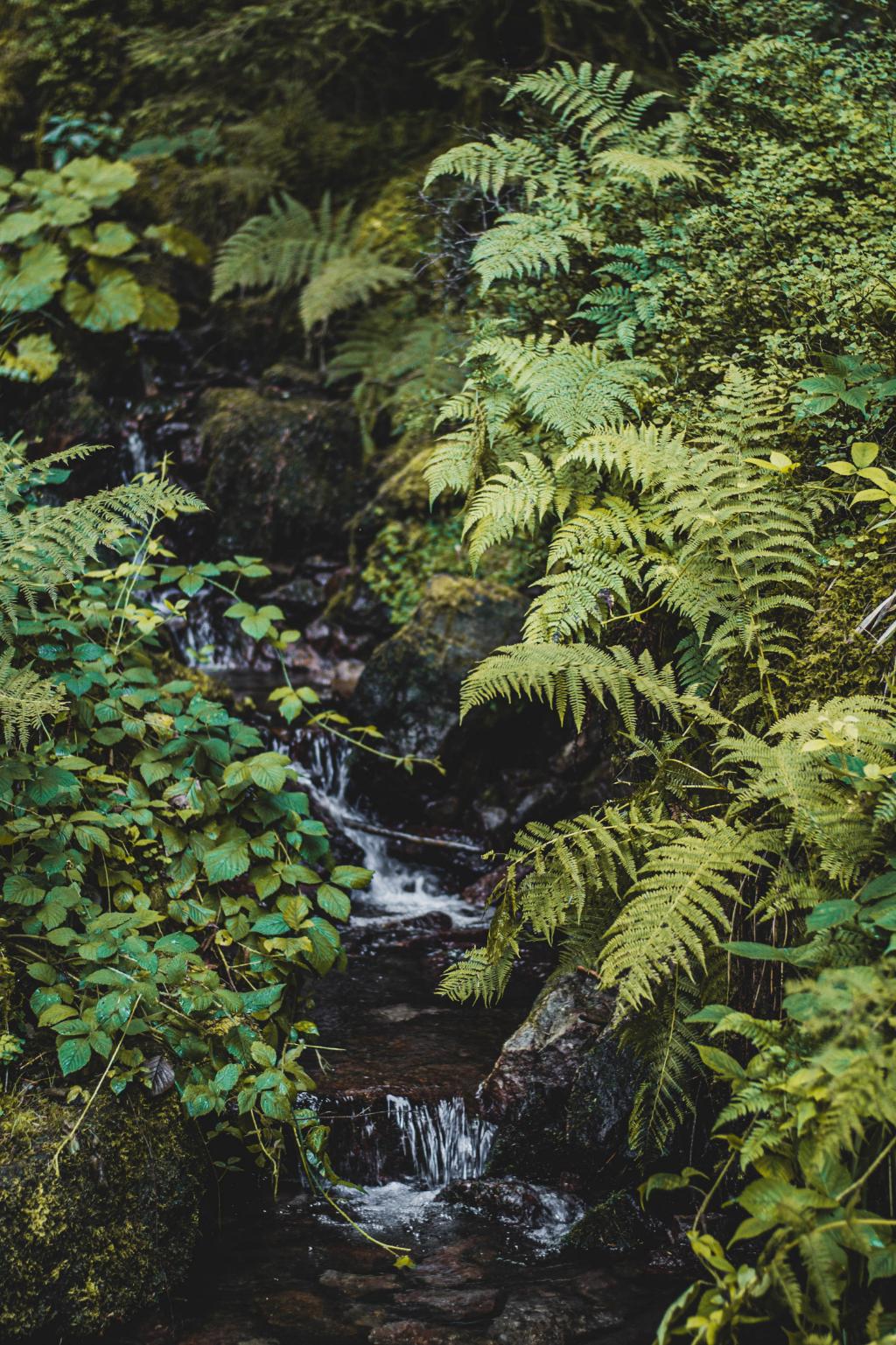 Natur beim Burgbachwasserfall