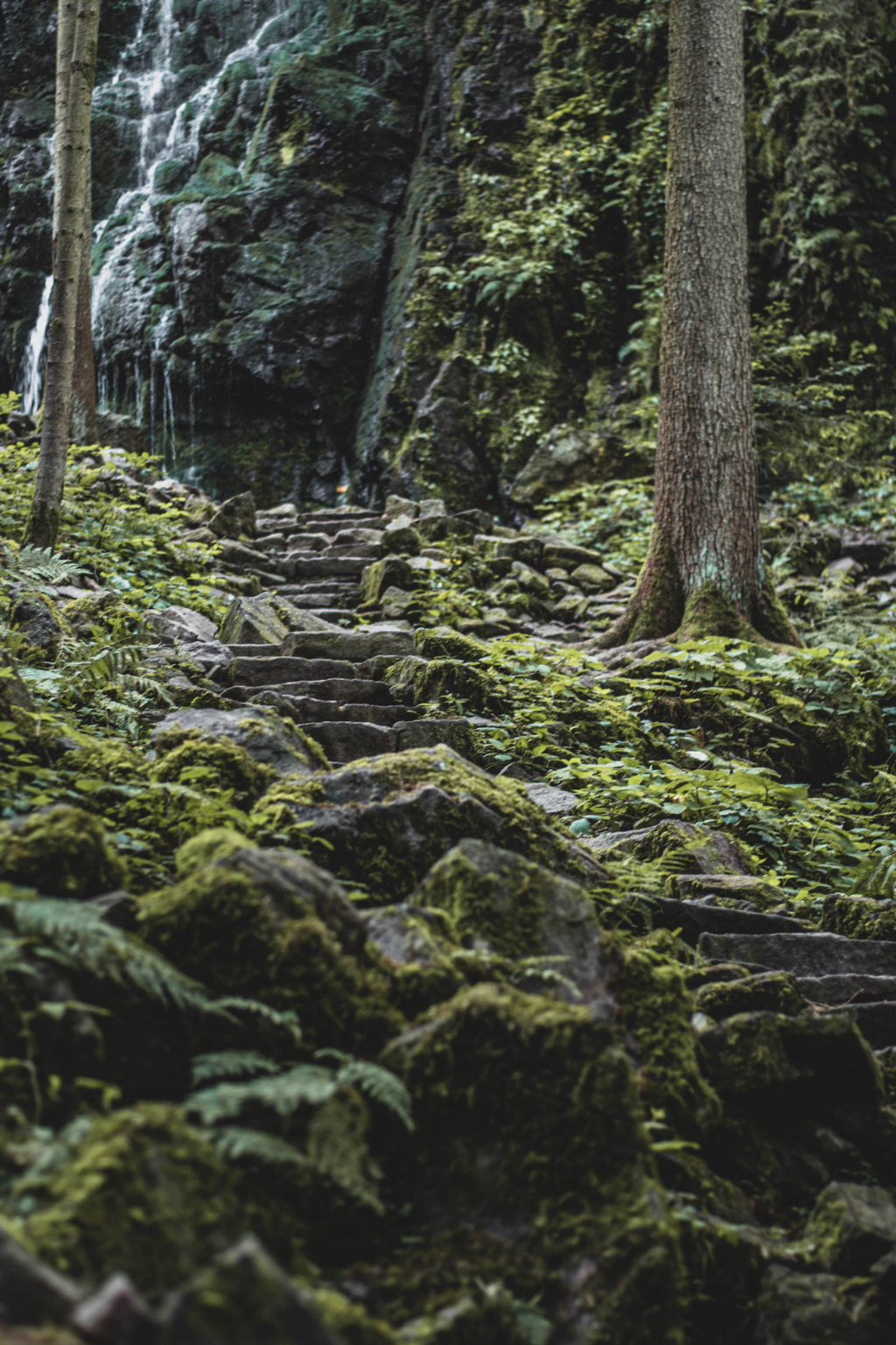 Moosbedeckte Stufen