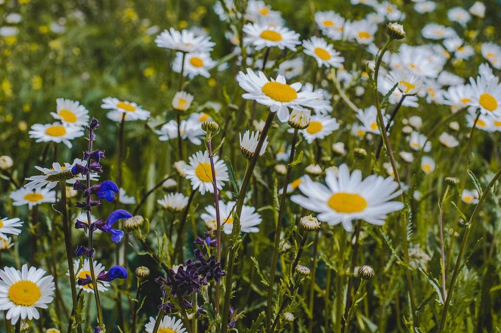 Burgweinting Naturschutzgebiet Auwald